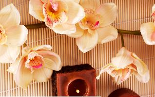 Aromaterapia, Perfumería y Cosmética Natural