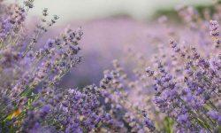 Tienda AromaTerapia Perfumeria